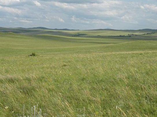 Steppe-sparse, dry, treeless grassland