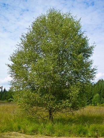 Une image contenant arbre, extérieur, ciel, herbe  Description générée automatiquement