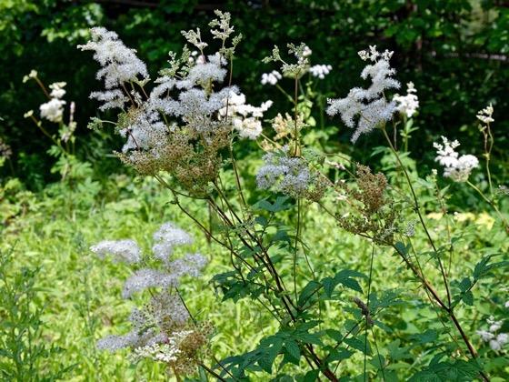 Une image contenant arbre, plante, fleur, extérieur  Description générée automatiquement