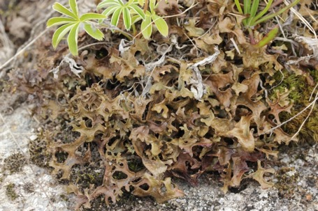 Une image contenant champignon, terrain, lichen, plante  Description générée automatiquement