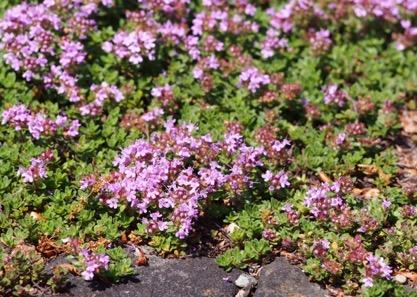 Une image contenant extérieur, fleur, plante, jardin  Description générée automatiquement