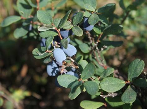 Une image contenant extérieur, plante, branche  Description générée automatiquement