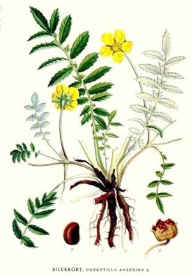 Une image contenant fleur, plante, bouquet, porcelaine Description générée automatiquement