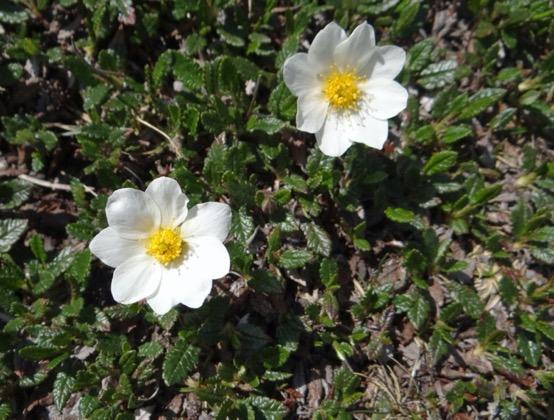 Une image contenant fleur, plante, extérieur, blanc  Description générée automatiquement