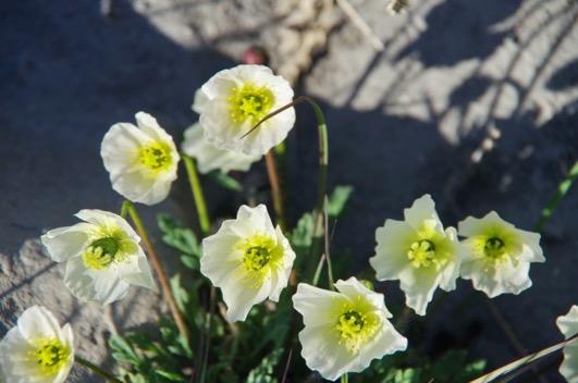 Une image contenant fleur, plante, fermer  Description générée automatiquement