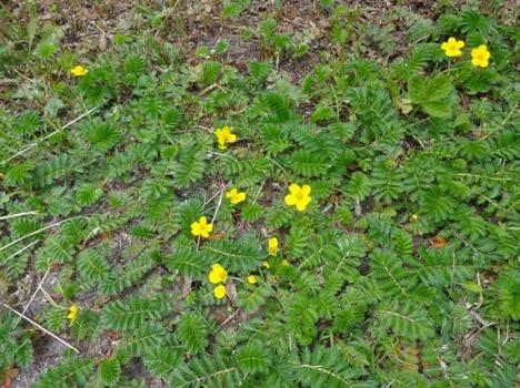 Une image contenant herbe, extérieur, fleur, plante  Description générée automatiquement