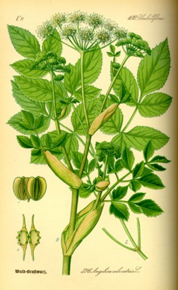 Une image contenant plante, bouquet, porcelaine  Description générée automatiquement