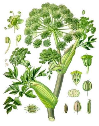 Une image contenant plante, fleur, légume  Description générée automatiquement
