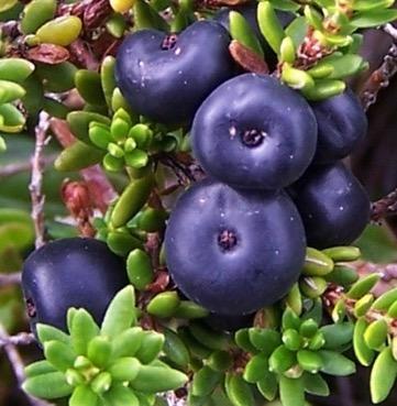 Une image contenant plante, fruit, variété, arrangé  Description générée automatiquement