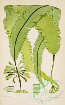 Une image contenant texte, plante, feuille  Description générée automatiquement