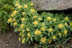 Une image contenant extérieur, plante, fleur, jardin Description générée automatiquement