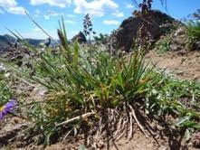Une image contenant extérieur, terrain, ciel, plante Description générée automatiquement