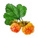 Une image contenant fruit, oranges, plante, arrangé Description générée automatiquement