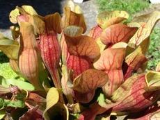 Une image contenant plante Description générée automatiquement