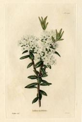 Une image contenant texte, mur, plante, enveloppe Description générée automatiquement